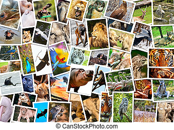 collage, diferente, animales