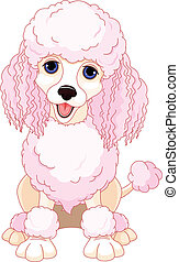 Pink poodle - Illustration of chic pink poodle