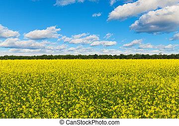 Rape field - Scenic view of rural field with rape flowers...