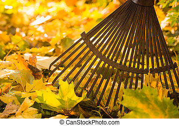 Rake and leafs - Autumn leaves and a rake on backlight,...