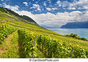 Lake Geneva with vineyards - Beautiful landscape of Lake...
