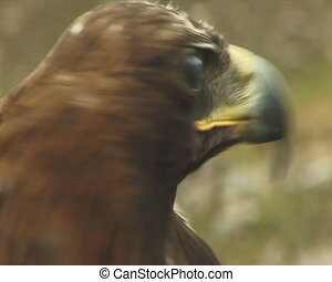The Big bird of prey - The Big bird of prey on background of...