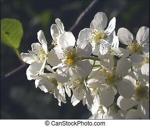 The White flowerses.
