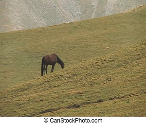 The Horses on background of the mou