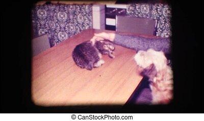 Vintage 8mm. Dog barking at cat