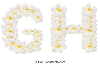 creado, aislado, gh, tropical, alfabeto, blanco, flor,...