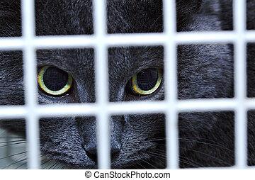 Female cat behind cage door watch grimly - Black female cat...