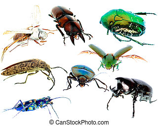 insect beetle collection set isolated on white background