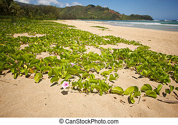 Flowers on the Bay Shoreline - Flowers on the Hanalei Bay...