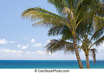 Palm Trees in the Tropics - Palm Trees and Inviting Tropical...