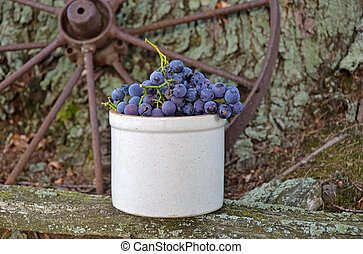purple grapes in old crock - Concord grapes in antique crock...