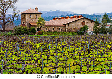 Winery - agriculture, america, botany, bud, california,...