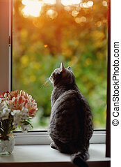 moustached striped - cat sitting on the windowsill in the...