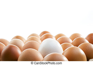 Stand Out - A tray of raw eggs on white background.