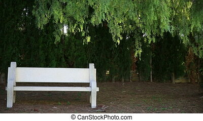 Bench and weeping willow