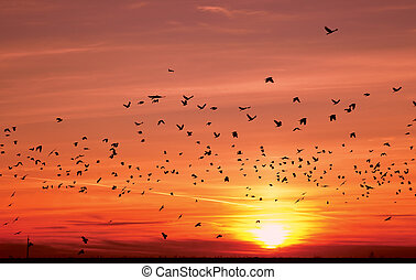 silhouettes of flying birds over sunset - silhouettes of...