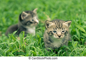 two kittens - adorable kittens