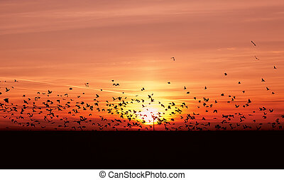 many migrating birds - many flying migrating birds over...