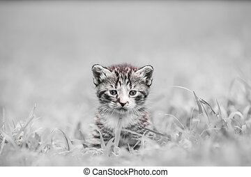 snow kitty - adorable kitty
