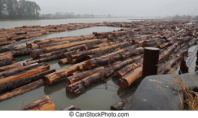 Fraser River Lumber. Wide shot. - Lumber in the Fraser River...