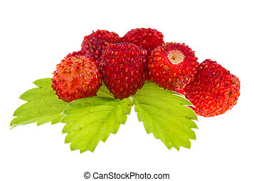 Wild strawberries on isolated