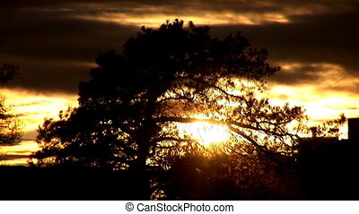 october sunset - sun has become entangled in the branches of...