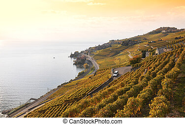 Vineyards in Lavaux region, Switzerland