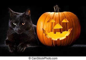 Halloween pumpkin black cat - Halloween pumpkin and black...