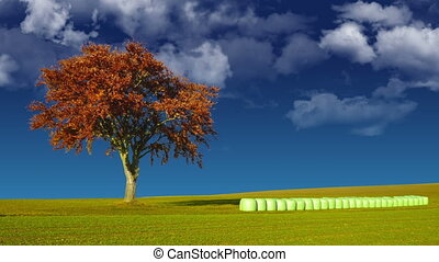 Tree and hay bales with looping cloud background.
