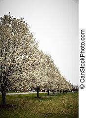 blooming treeline