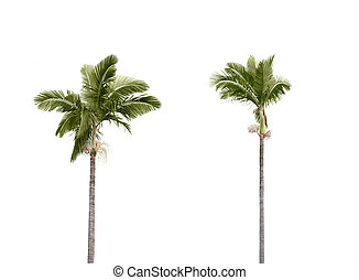 Plam trees on white - Two plam trees isolated on white...
