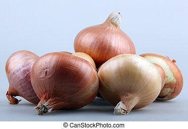 Onion - Fresh onion