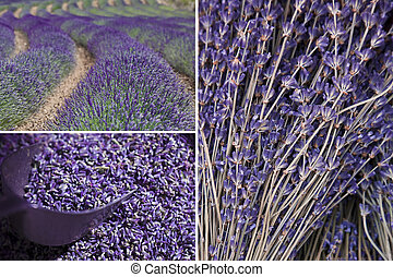 Variety of Lavender