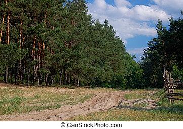 pino, árboles, arenoso, camino