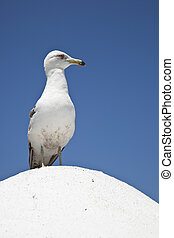Sea Gull is Watching