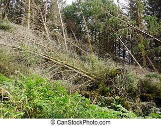 Tornado ravaged forest