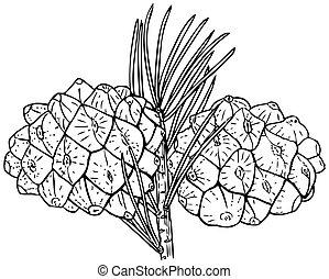 Plant Pinus bungeana - Cones of Plant Pinus bungeana...