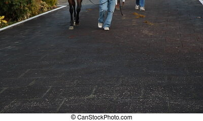 Racehorse feet and human feet. - Trainers show off their...