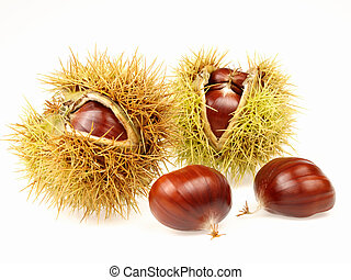 chestnut - Autumn fruit arranged on white background