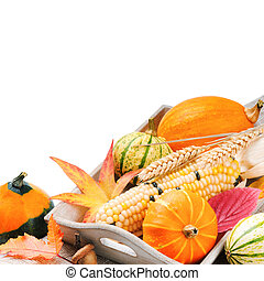 Autumn still-life with pumpkins and corn isolated over white