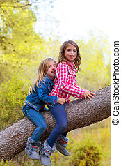 children friends girls climbing to a pine tree trunk in...