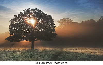 Sunrise sunbeams bursting through tree onto foggy landscape...