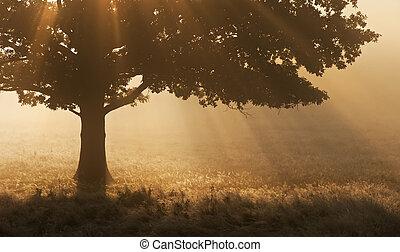 Sunrise sunbeams bursting through tree onto foggy landscape
