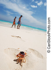 Crab on a beach - Crab on a caribbean beach in Dominican...