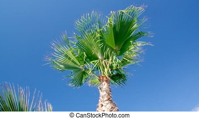 Palm tree against a blue sky