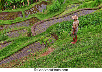Balinese rice field terrace and farmer, Bali, Indonesia