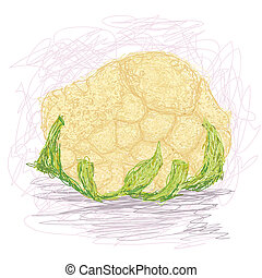 cauliflower - closeup illustration of a fresh cauliflower...