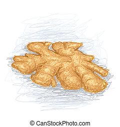ginger - closeup illustration of a fresh ginger root.