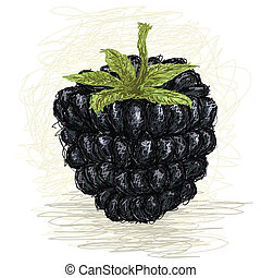 blackberry - closeup illustration of a fresh blackberry...