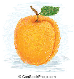 apricot - closeup illustration of a fresh apricot fruit.